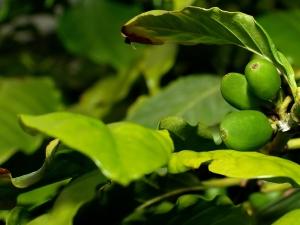 1262236_fresh_coffee_beans